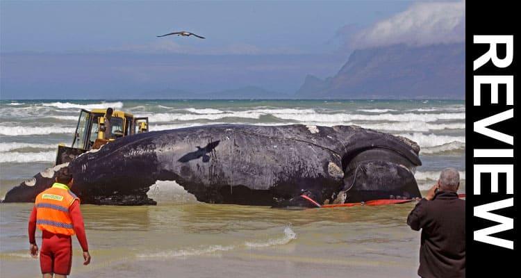 Blue Whale Bitten In Half 2021 Smooth