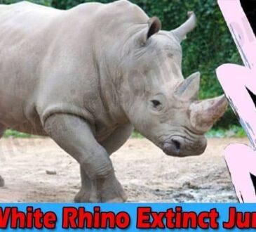 Is The White Rhino Extinct June 2021